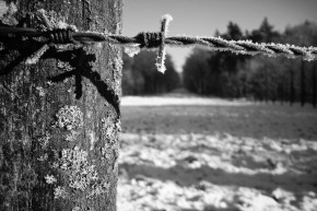 Barbed wire by Wouter Brandsma