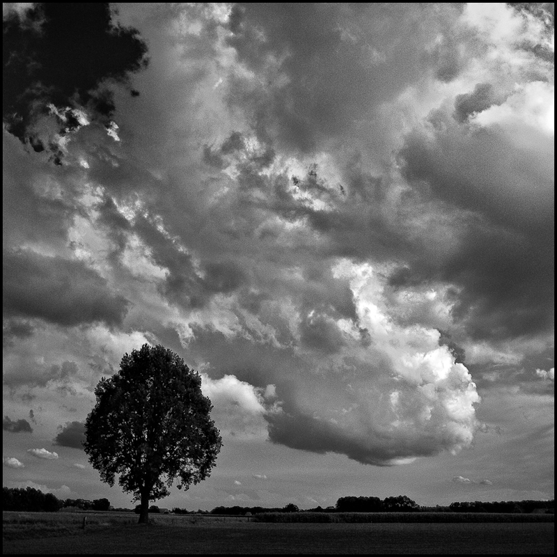 Lone tree by Wouter Brandsma