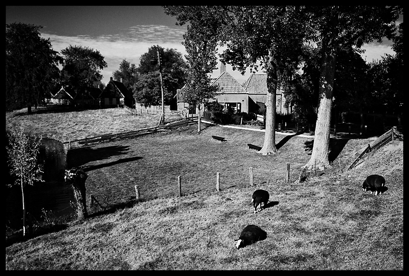 images, photographs, stroll photography, wouter brandsma, ricoh grd, ricoh grdigital, ricoh grd3, ricoh gr digital 3, ricoh grdiii, ricoh gr, photography, grd, grd3, snapshots, grd snapshot, ricoh grd photography, black and white, strolling, brandsma, ricoh gr digital iii, impression by Wouter Brandsma