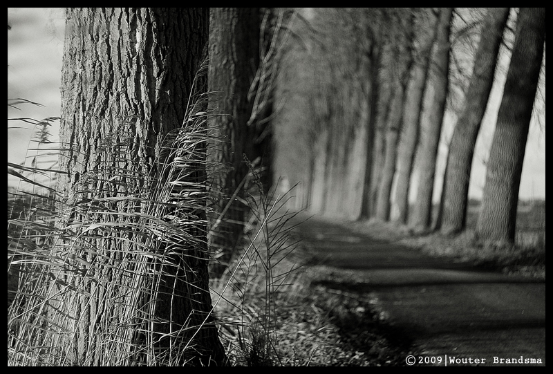 In the light by Wouter Brandsma