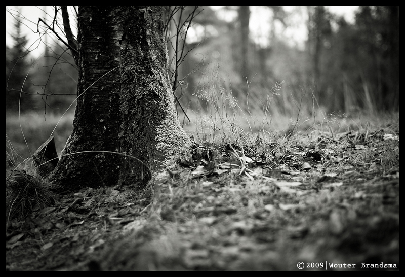 Leica M8 and 35mm Summilux f/1.4 by Wouter Brandsma
