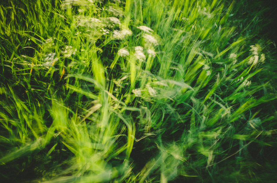 grass, breeze, chill, color, colour, stroll photography, light, shadows, light and shadows, ricoh gr, gr ricoh, gr, ricoh, pentax, pentax ricoh, pentax gr, ricoh gr digital, ricoh grd, gr digital, wouter brandsma