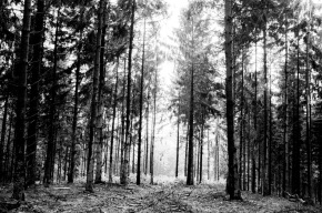 photograph, stroll photography, forest, trees, light and shadows, wouter brandsma, ricoh, ricoh gr, gr digital