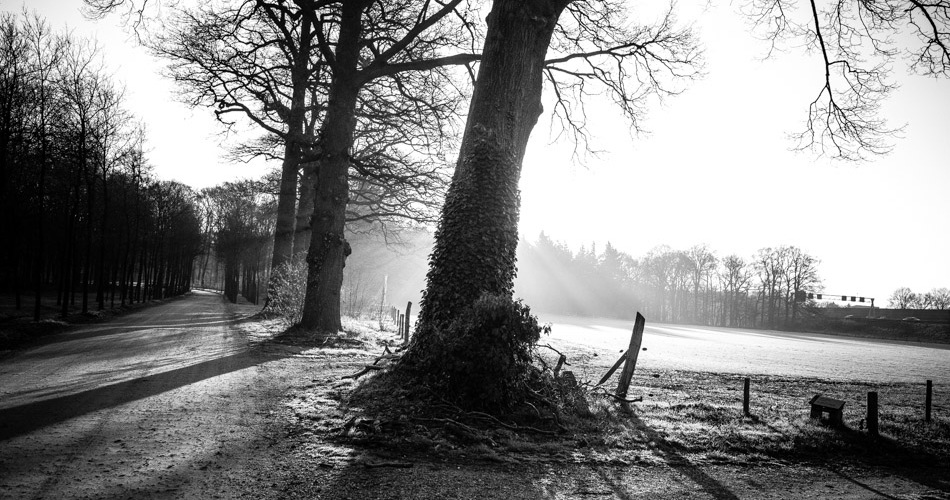 photography, photograph, wouter brandsma, landscape, black and white, light, shadows, light and shadows, ricoh gr, ricoh, trees, rural