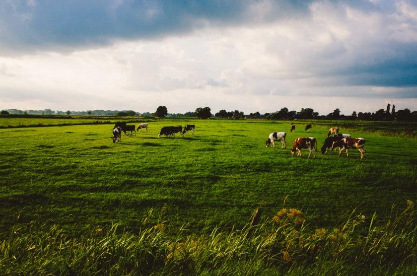 stroll photography, Dutch Light, Wouter Brandsma